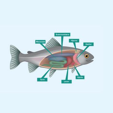 Fisken indeni