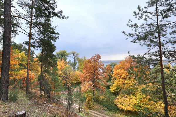 Kend skovens traeer   vladimir salman  Shutterstock    233752615  lille