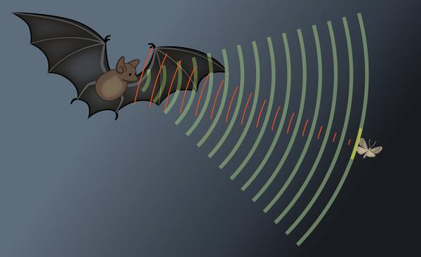 Lyde, vi ikke kan høre – et undervisningsmateriale til naturteknologi indskoling