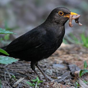 Fuglenes føde