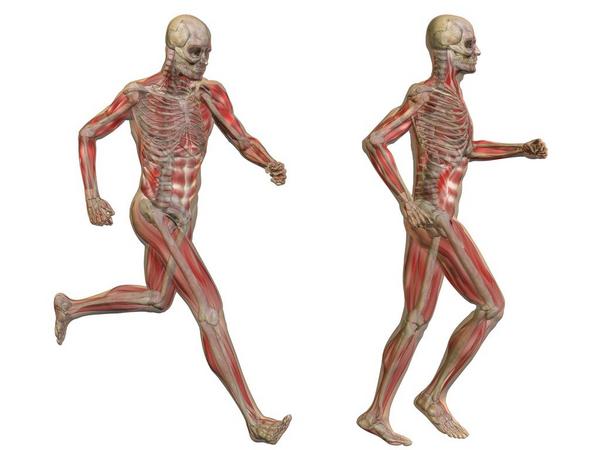 Skelettet – et undervisningsmateriale til naturteknologi indskoling