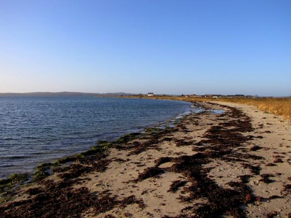 Stranden – et undervisningsmateriale til naturteknologi indskoling