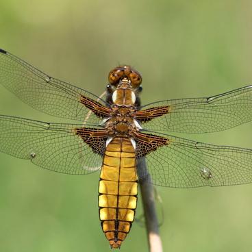 Insekter i vandløb og sø