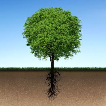 Træets opbygning