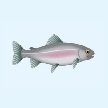 Fisken udenpå