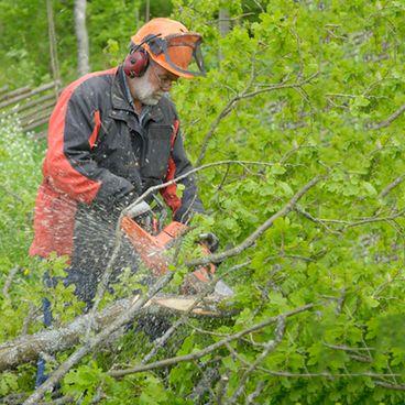 På arbejde i skoven