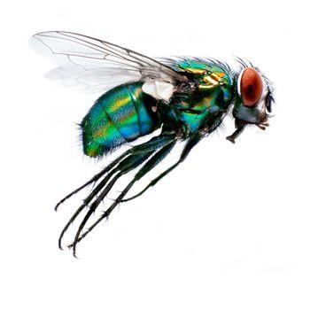 Insekter i luften