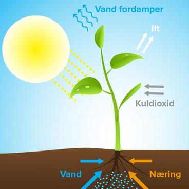 Transport i planter
