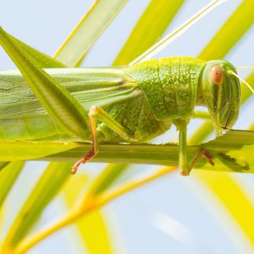 Insektets opbygning